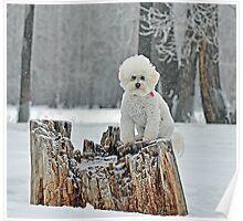 Furry Snow Angel  Poster