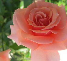 Peach Petal Fever by MarianBendeth
