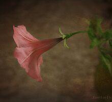 petunia by janetlee