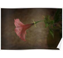 petunia Poster
