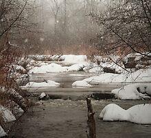 Deep Hollow Beaver Dam by Geno Rugh