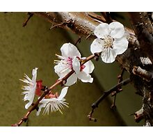Spring with freshness Photographic Print