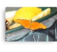 Julia Butterfly takes in some sun Canvas Print