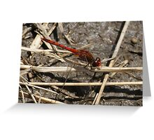 After the rain - dragon fly 5 Greeting Card