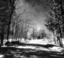 Winter Shadows by sundawg7