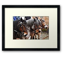 4 in a line Framed Print