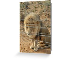 Leo in a south africa ranch Greeting Card