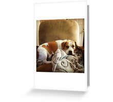 Belle Scrolls Greeting Card