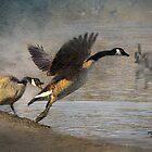 """Wild Goose Chase"" by Melinda Stewart Page"