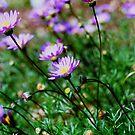 Purple Daisies by Natalie Cooper