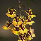 Orchids by Woodman