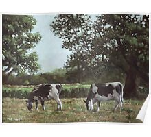Two Cows in field at Throop Poster