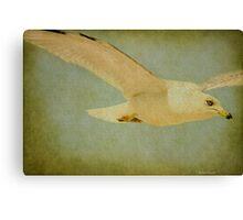 Seagull Texture Canvas Print