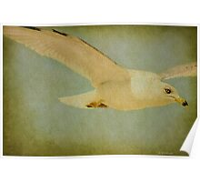 Seagull Texture Poster