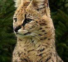 Elegant Serval by Mark Hughes