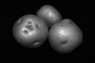 potato trio: black & white by dedmanshootn
