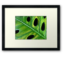 Cheese Plant Framed Print