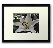 Wonderfully White With Super Stamens Framed Print