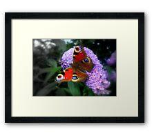Butterfly Cushion Framed Print