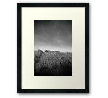 Grass in Bull Island Framed Print