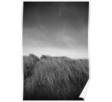 Grass in Bull Island Poster