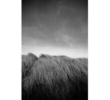 Grass in Bull Island Photographic Print