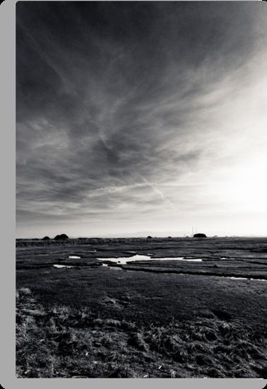 Bull Island by Alessio Michelini