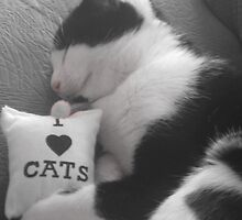 i love cats2 by millymuso