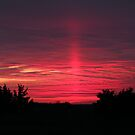 Pink Ray Sunset by Sharon Woerner