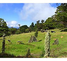 Perfect Grazing Pasture- Costa Rica Photographic Print