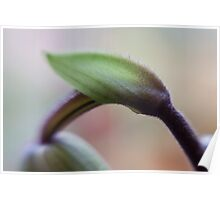 Orchid Stems II Poster