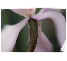 Orchid Stems I Poster