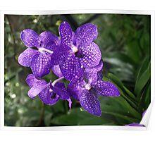 Orchid Garden (2) Poster