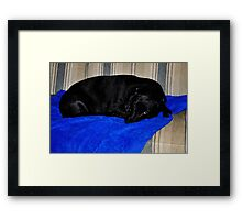 Marlie- bored and ready for spring Framed Print