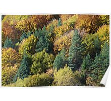 Nature canvas Poster