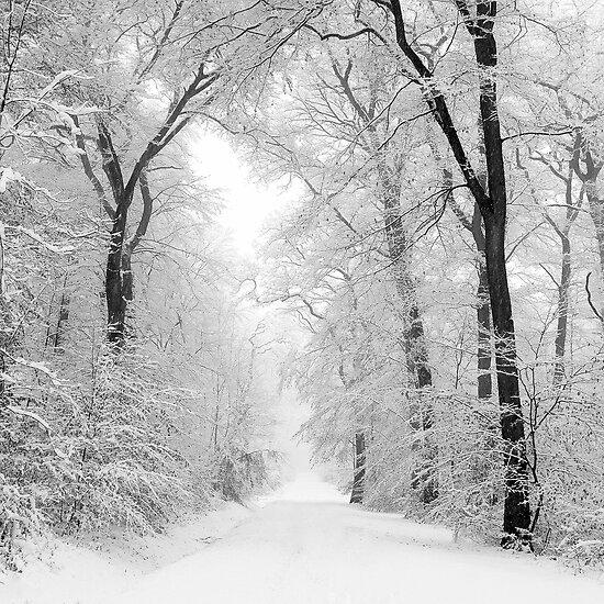 White way by Alain Baumgarten