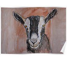Alpine Dairy Goat Poster