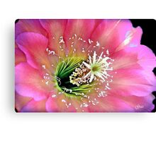 Stroke of Pink Canvas Print