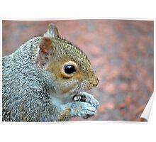 Squirrel Profile Poster