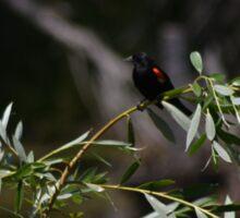 red winged blackbird Sticker