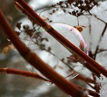 Bubbly by Lynn  Gibbons