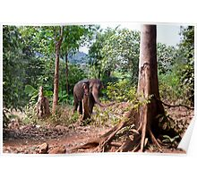The Asiatic Elephant Poster