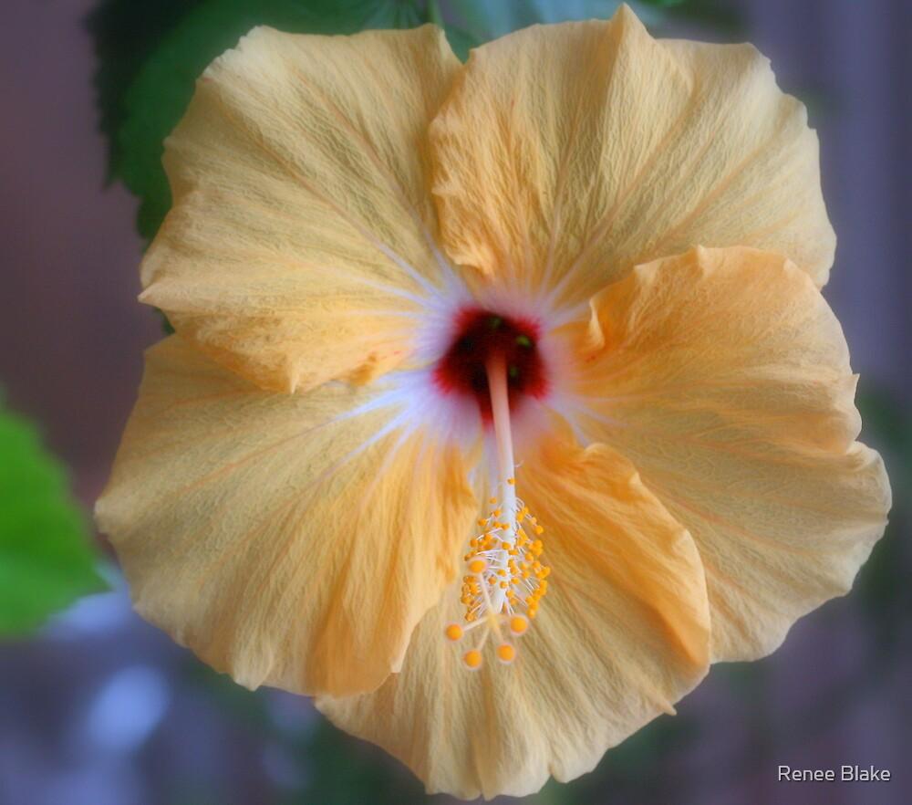 Hibiscus Beauty  by Renee Blake