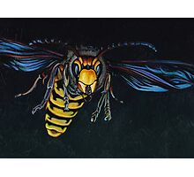 Japanese Hornet Photographic Print