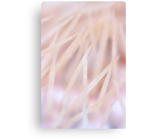 Piercing Softness Canvas Print