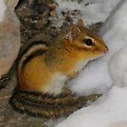 Crap!  It's Still Winter (Eastern Chipmunk) by Robert Miesner