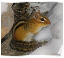 Crap!  It's Still Winter (Eastern Chipmunk) Poster