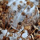 Snow Bubble by MaryLynn