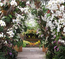 Orchids on DIsplay by Jessica Jenney