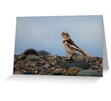 Snow Bunting Greeting Card